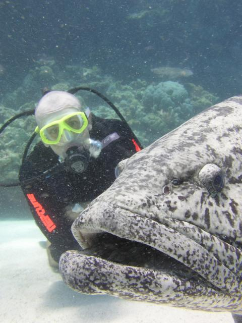 Potato Cod, Code Hole, Great Barrier Reef