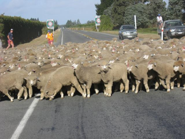 Traffic Jam, Near Christchurch