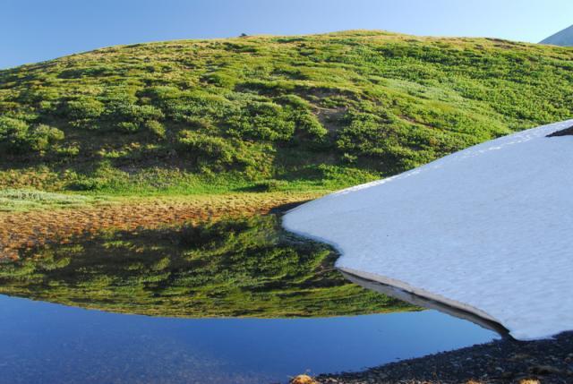 Wilcox Pass Trail, Jasper National Park