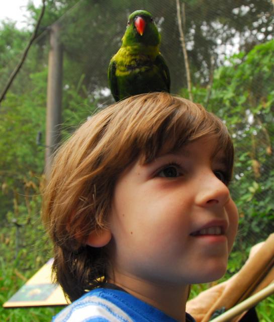 Parrot on Ron's Head, Oregon Zoo, Portland